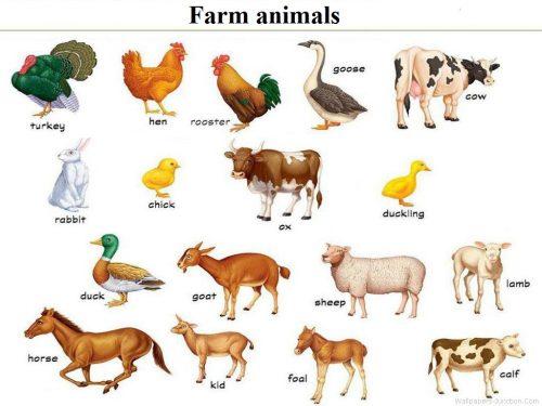 học tiếng Anh theo chủ đề con vật